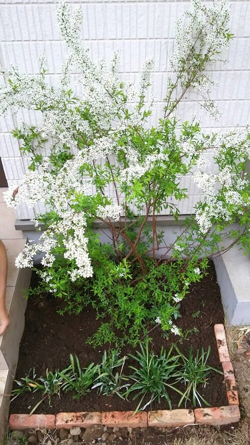 レンガを並べるだけの花壇作り方