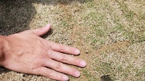 芝生の目地に目土を入れてみた