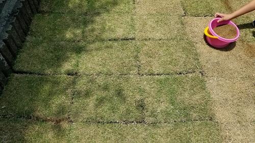 自分で芝生植えるベタ張り