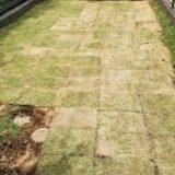 芝生の植え方をべた張り