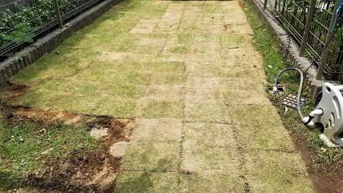 【芝生を自分で植える】素人がDIYで簡単にできました!