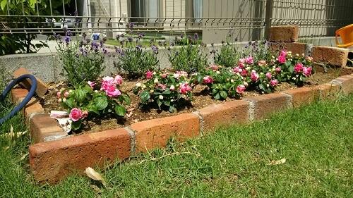 【簡単】レンガで花壇!並べるだけで作ってみた自作DIY