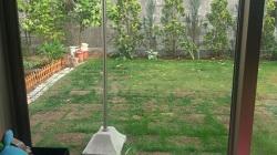 自分で芝生を植えてみる